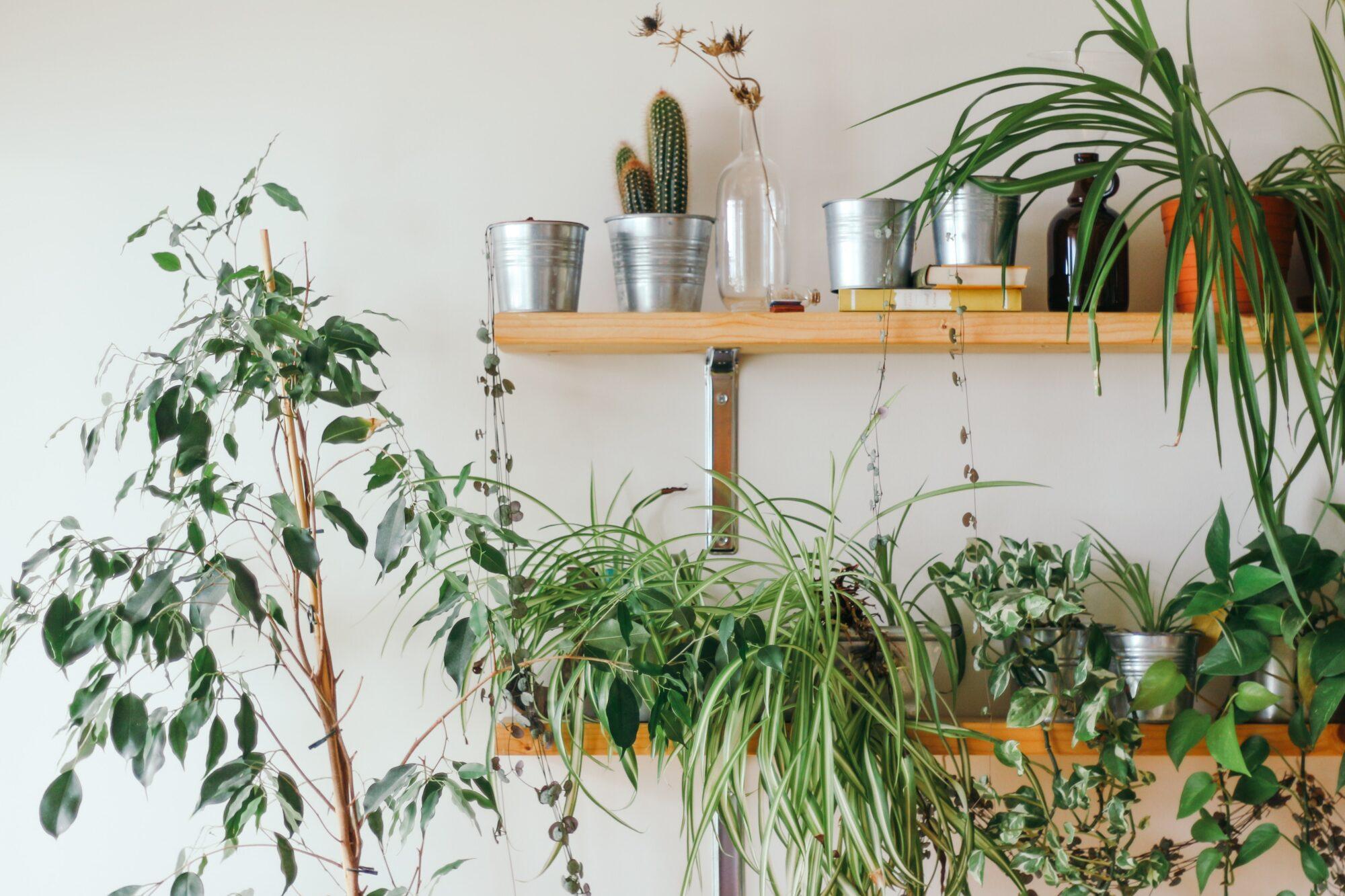 Vælg de rette planter til badeværelset