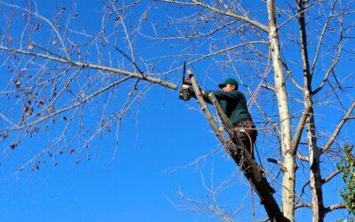 Få professionelle til beskæring af træer i det midtjyske