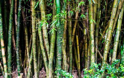 Skab en hyggelig stemning i dit hjem med flotte bambusborde
