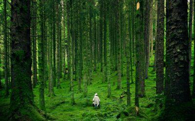 Hvad kan vi gøre, for at besvare den smukke natur i Danmark?